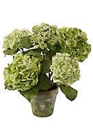 Garden Moss Potted Hydrangea