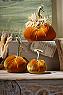 Velvet Pumpkin Photo