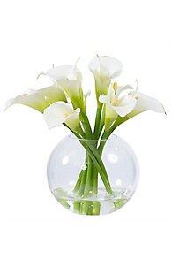 Calla Lily in Glass