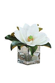 Single Magnolia in Square Glass