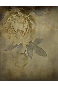 Fiore Bianco Giclee