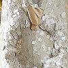 Swatch Image 0579206